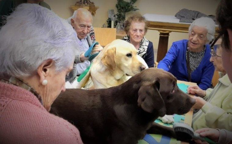 La residencia de mayores Asispa Soto Fresnos implanta terapia canina