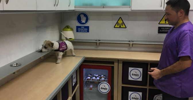 Adiestramiento de perros en la Fundación Canem.