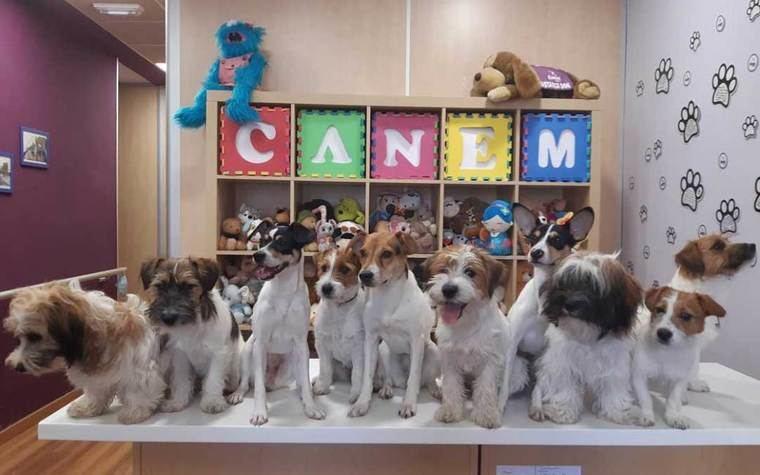 Crónica de la entrega 0120 de perros de alerta médica CANEM