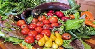 Dieta mediterránea contra la fragilidad de los mayores.