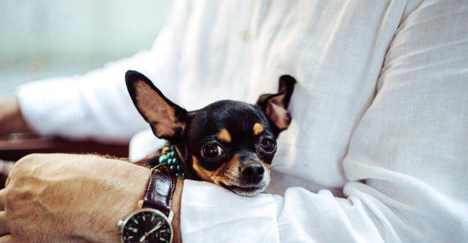 Residencias de mayores que permiten animales de compañía