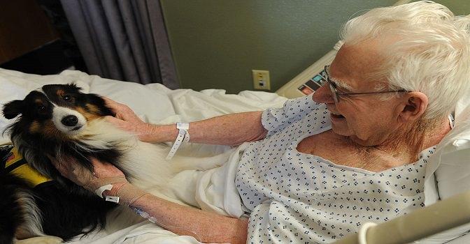 Nuevas terapias con perros y muñecas para personas con demencia en el Grupo Albertia